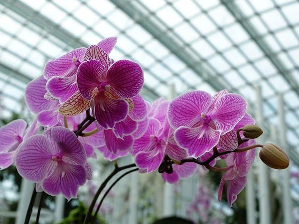 květina v zimní zahradě