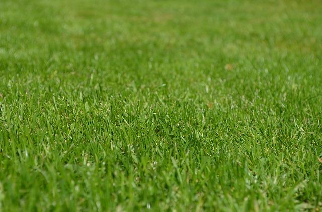dokonalý trávník