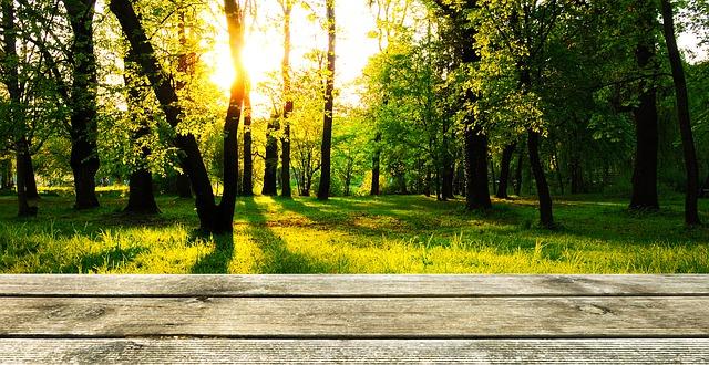 Poznejte výhody a nevýhody dřevěných teras